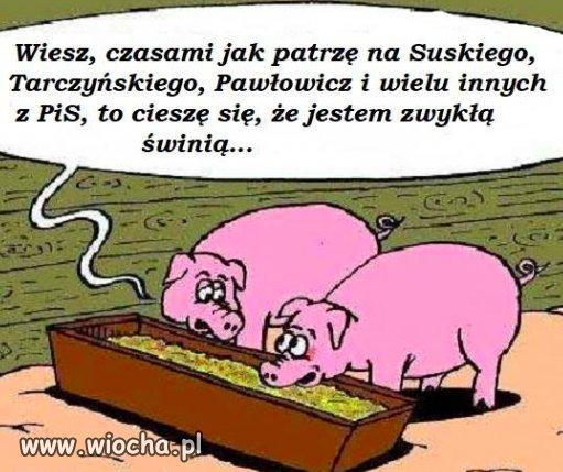 Zwykle-swinie