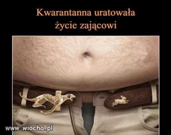 Kwarantanna-uratowala-zycie-zajacowi