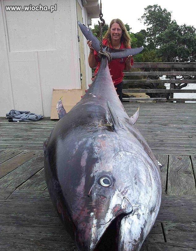 Rekordowy-tunczyk-ponad-400-kg