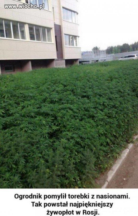 Ogrodnik-chyba-pomylil-nasiona