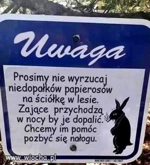 Nie-badz-baran-i-chron-zajace