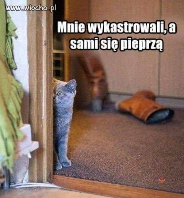 Czyli-przemyslenia-kotow