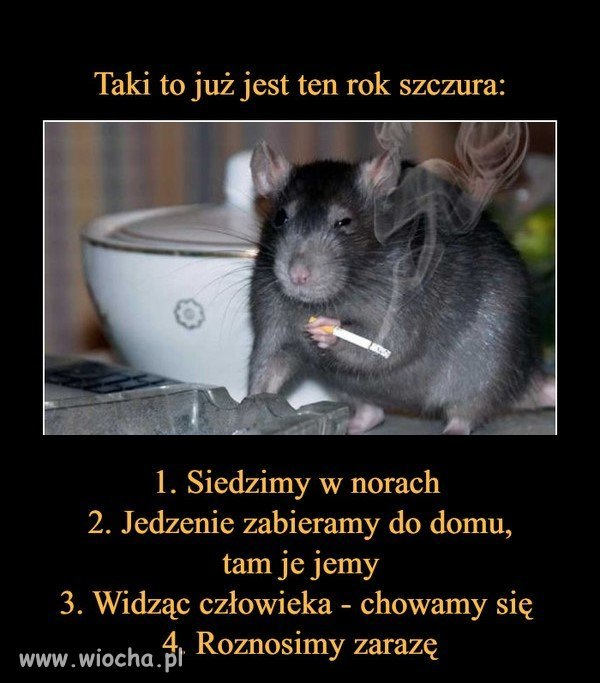 Rok szczura
