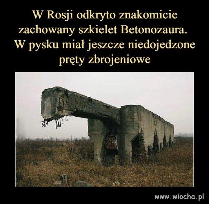 Paleontologia made in Russia