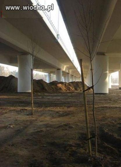 Tylko-w-Polsce-sadzi-sie-drzewa-pod-wiaduktami