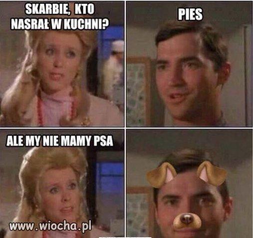 Pies.