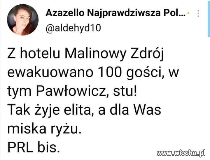 Elita-sie-bawi