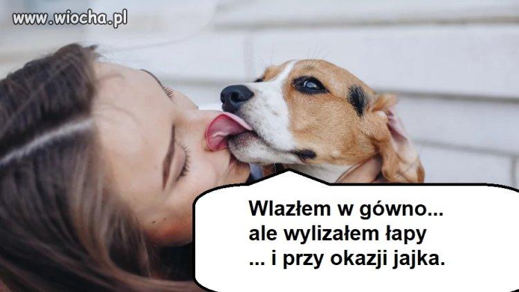 Psie historie