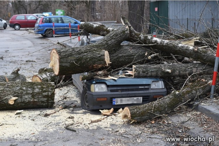 Drzewa-kontratakuja