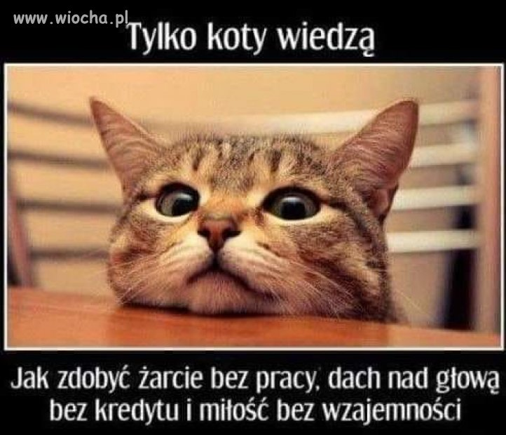 Tylko-koty-wiedza