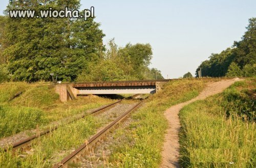 Niskotorowka