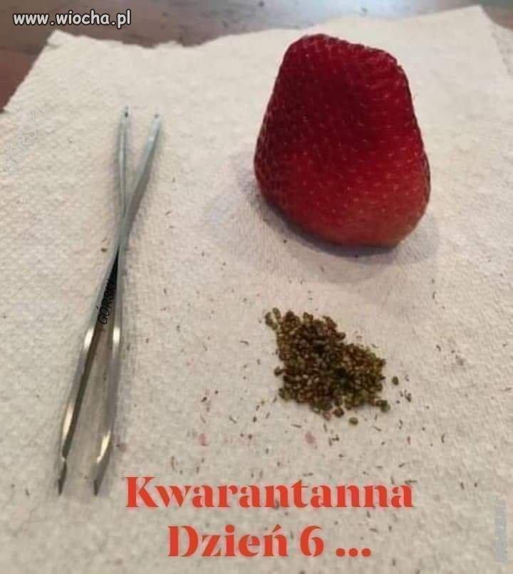 Kwarantanna.
