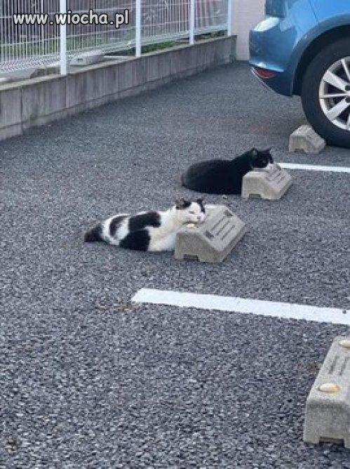 Zaparkowane aiersxiuchy.