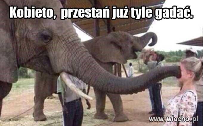 Nawet-slon