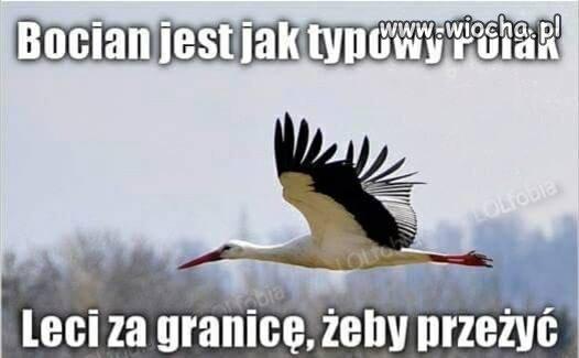 Typowy Polak...
