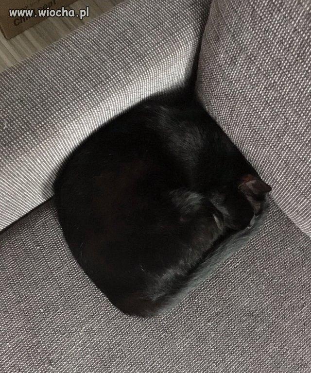 Moj-kot-jest-jakis-dziwny
