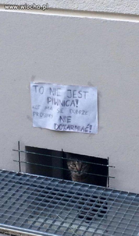 Kot-ma-sie-dobrze