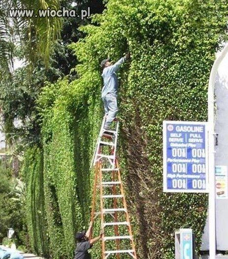 Ogrodnicze akrobacje.