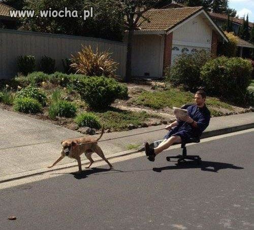 Spacer-z-psem...Biedny-pies-nienormalny-wlasciciel
