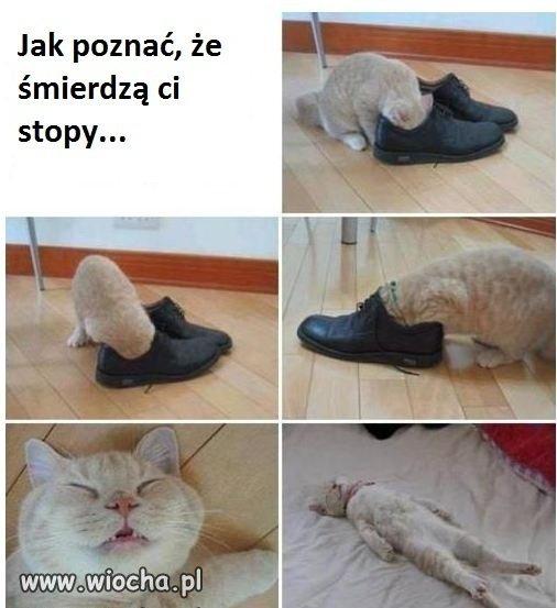 Kot-prawde-ci-powie