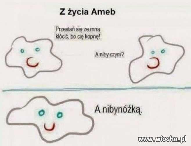 Z-zycia-ameb