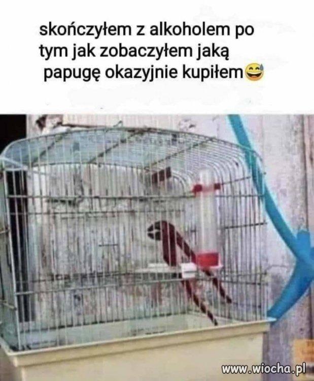 Ptak jak ptak